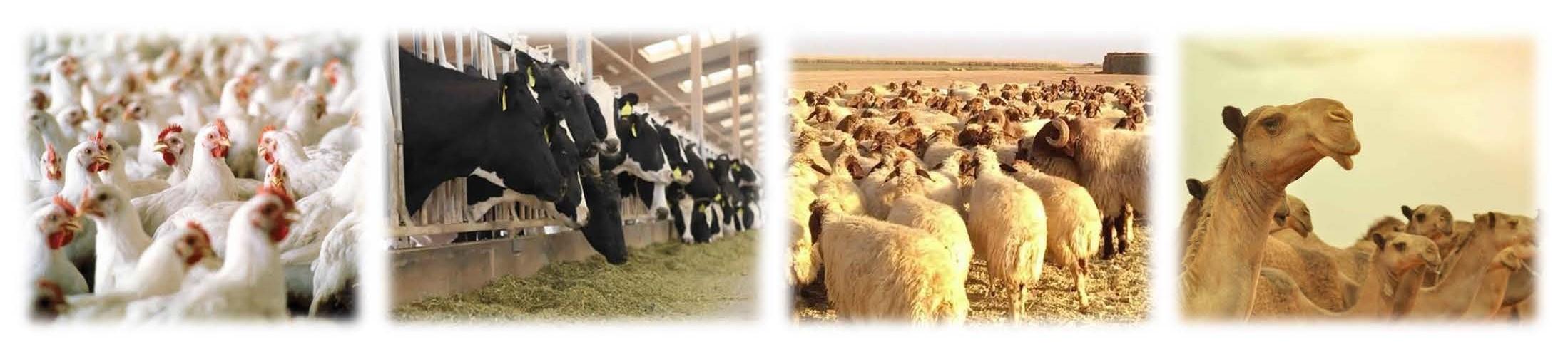 الثروة الحيوانية - تنمية الثروة الحيوانية وإنمائها...