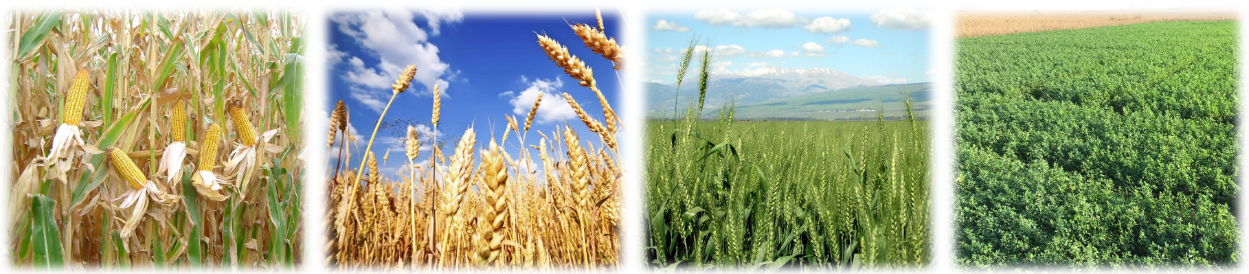 Natural Resources - Optimum utilization of the limited natural resources...